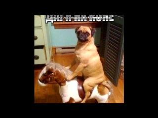 ��� ����� 10 �����)� ��� ������ Jackal - Shakedown (Original Mix). Picrolla